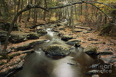 Photograph - Dingmans Creek by Debra Fedchin