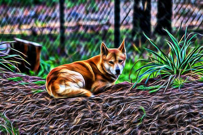 Dingo From Ozz Art Print