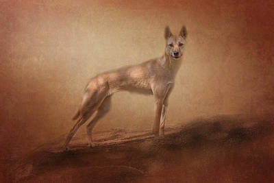 Photograph - Dingo by Michele Wright