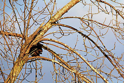 Photograph - Dining Alone by Debbie Oppermann