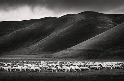 Flock Photograph - Dining Land by Pietro Bevilacqua