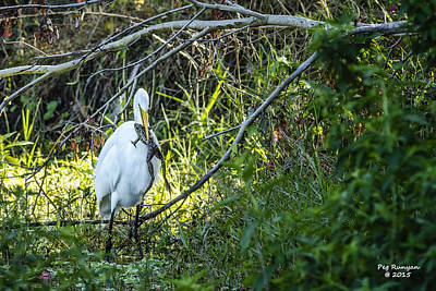 Photograph - Dinner In The Swamp by Peg Runyan