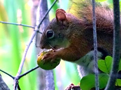Photograph - Dinner Of A Squirrel by Lilia D