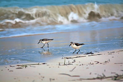 Photograph - Dinner Time At The Beach by Tatiana Travelways