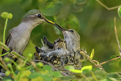 Wall Art - Photograph - Dinner Time by Diana Marcoux