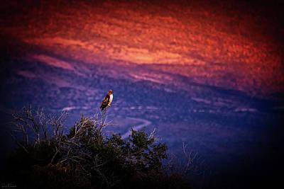 Thorn Tail Photograph - Dinnertime by Rick Furmanek