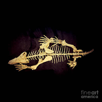 Photograph - Dino Bones by Ray Warren