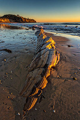 Crystal Cove Photograph - Dinosaur Bones by Peter Tellone