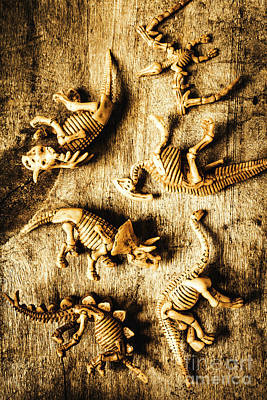 Historical Photograph - Dinosaurs In A Bone Display by Jorgo Photography - Wall Art Gallery