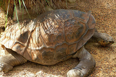 Photograph - Dippy's Shell by Miroslava Jurcik