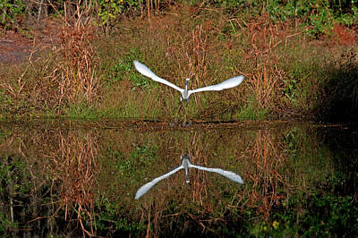 Photograph - Direct Flight by Kay Lovingood