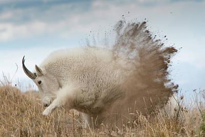 Photograph - Dirt Bath by Kent Keller