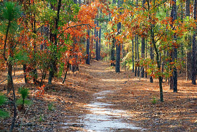 Photograph - Autumn Scene Dirt Road by Joseph C Hinson Photography