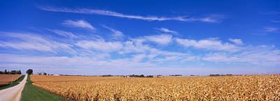 Dirt Roads Photograph - Dirt Road Along Corn Fields, Minnesota by Panoramic Images