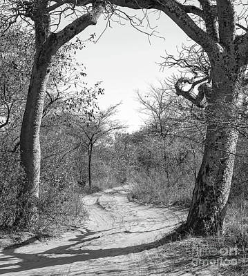 On Trend At The Pool - Dirt Road Botswana Black And White by Tim Hester