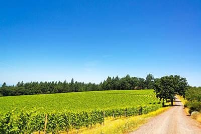 Pinot Noir Photograph - Dirt Road In Vineyard by Jess Kraft