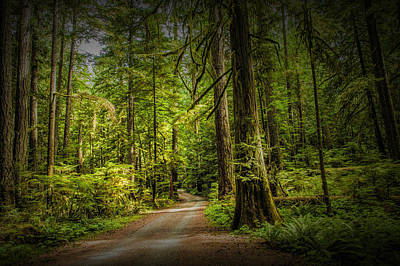 Dirt Road On Vancouver Island Art Print