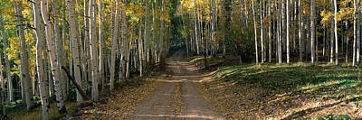 Dirt Roads Photograph - Dirt Road Through Forest, Colorado by Panoramic Images