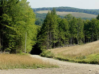 Dirt Road Through The Mountains Art Print by Jeanette Oberholtzer