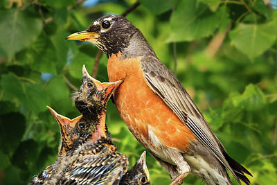 Photograph - Disappointed Baby Robins by Joni Eskridge