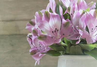 Peruvian Lily Photograph - Discover by Kim Hojnacki