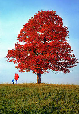 Discovering Autumn Art Print by Steve Harrington