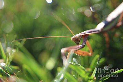 Photograph - Discovering The Praying Mantis  by Neal Eslinger