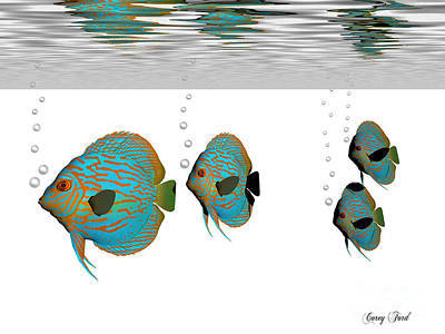 Discus Fish Art Print by Corey Ford