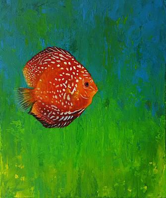 Discus Fish Original