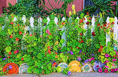 Photograph - Dish Garden by HH Photography of Florida