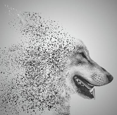 Human Head Photograph - Disintegrated Wolf by Martin Newman
