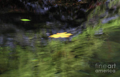 Central Oregon Photograph - Distorted Leaf by Gary Wing