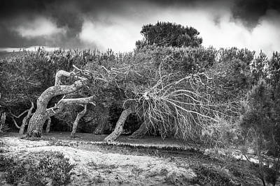Photograph - Distorted Trees by Gary Gillette