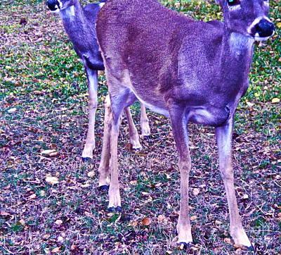 Two Deer Photograph - Distrubing Deer by Chuck Taylor