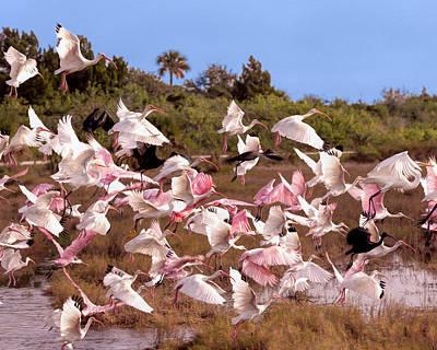 Ornithology Photograph - Disturbance by John M Bailey