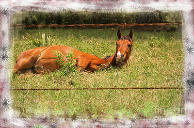 Photograph - Disturbed Napping by Kim Henderson