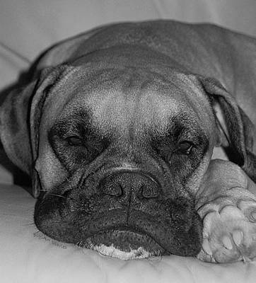 White Boxer Dog Photograph - Disturbing His Nap by DigiArt Diaries by Vicky B Fuller