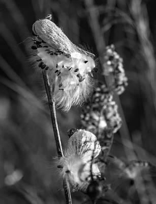 Weed Photograph - Ditch Floozy Bw by Steve Harrington