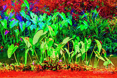 Photograph - Ditch Of Plants by Rick Bragan