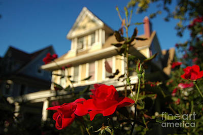 Photograph - Ditmas Summer Rose by Mark Gilman
