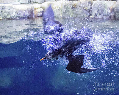 Photograph - Dive 1 by Cheryl Del Toro