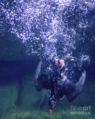 Photograph - Dive 2 by Cheryl Del Toro