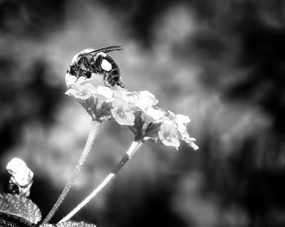 Beauty Mark Photograph - Dive Right In Honey II by Mark Andrew Thomas