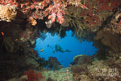 Woman Cave Photograph - Diver And Coral Cave by Reinhard Dirscherl