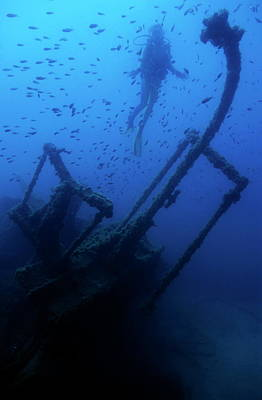 Diver Exploring The Dalton Shipwreck With A School Of Fish Swimming Print by Sami Sarkis