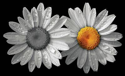 Photograph - Diversity by Art Cole