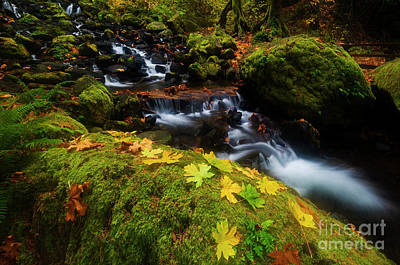 Photograph - Dividing The Forest by Mike Dawson