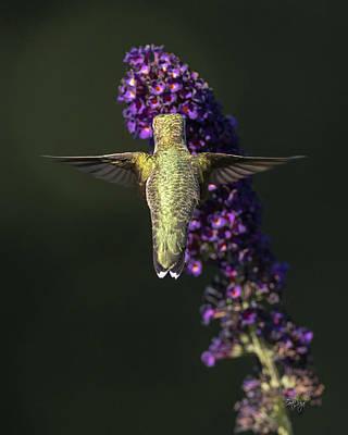 Photograph - Divine Beauty by Everet Regal