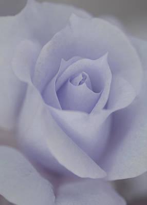 Blue Rose Photograph - Divine Blue Rose by The Art Of Marilyn Ridoutt-Greene
