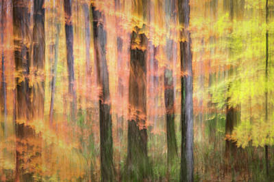 Photograph - Divine Brushstrokes by Kim Carpentier